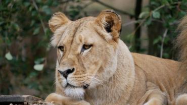 zoo lešná