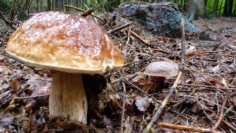 houby_15