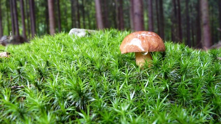 houby_3