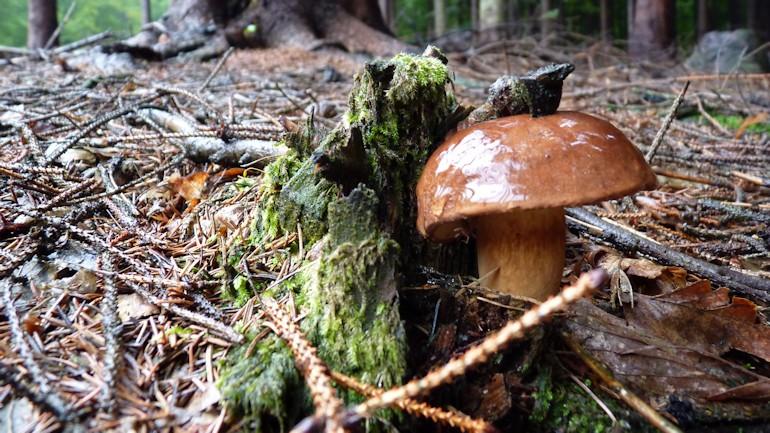 houby_5